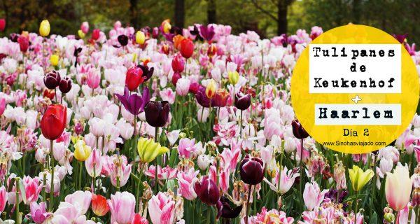 Tulipanes de Keuhenhof y Haarlem